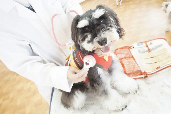 病院 診察 犬の幼稚園 シュシュ 西宮