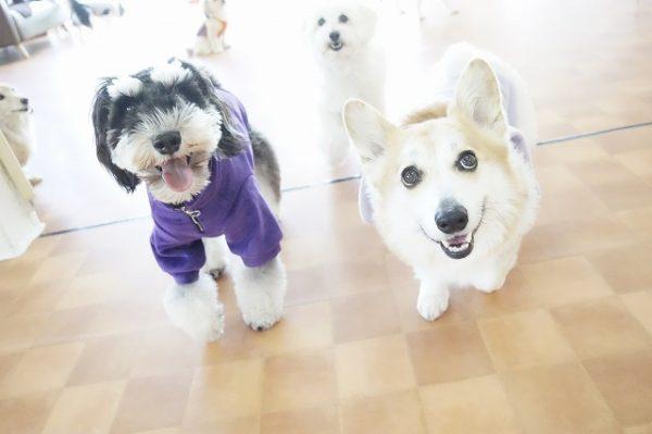かけっこ 犬の幼稚園 運動会 犬のしつけ