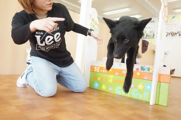ハードル 犬の幼稚園 シュシュ