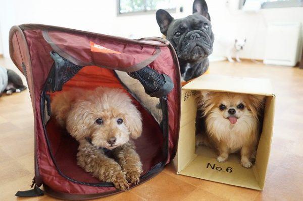災害訓練 犬の幼稚園 避難 備えあれば患いなし