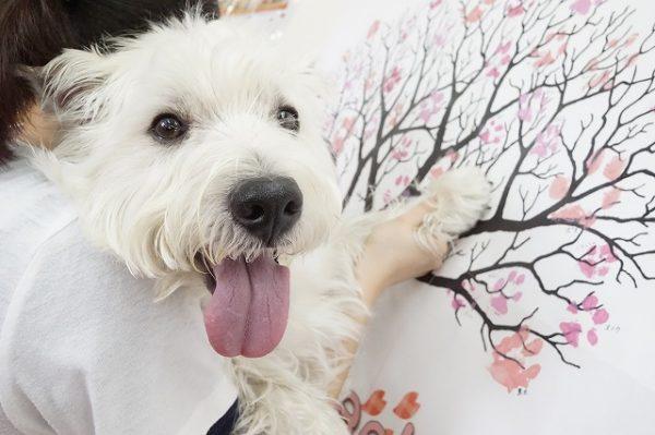 満開 春 桜 犬の幼稚園 犬のしつけ