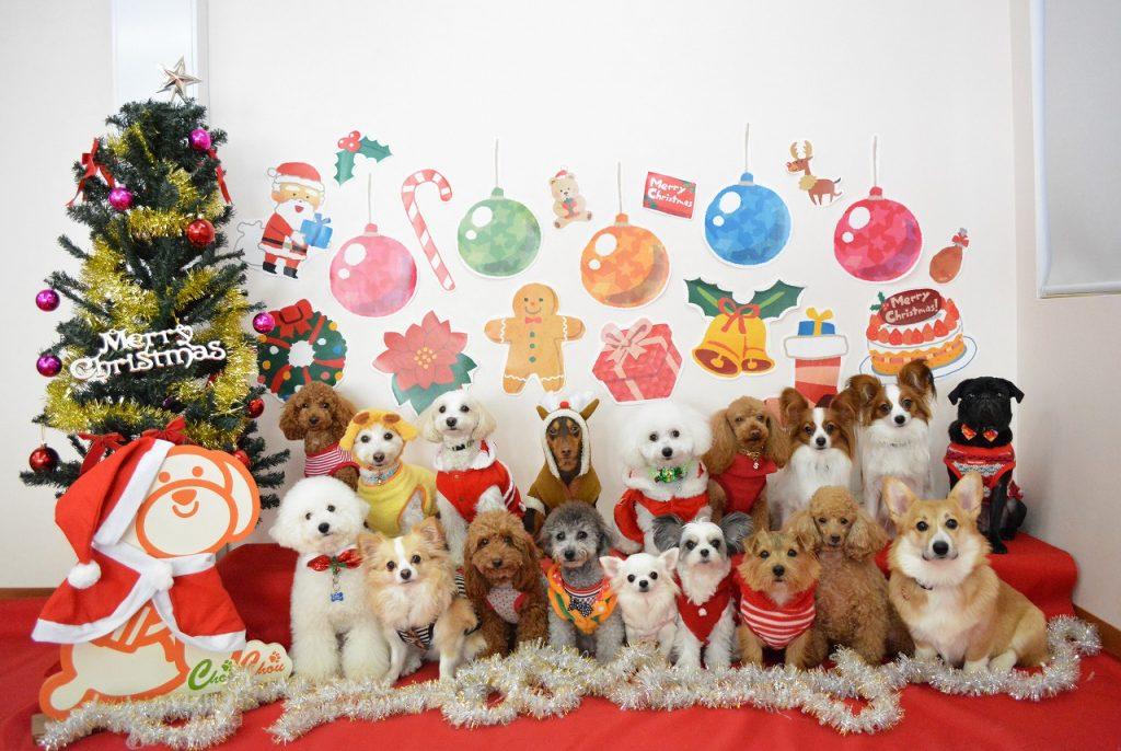 集合写真 クリスマス