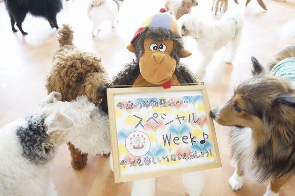 スペシャル 記念日 特別な日 犬の幼稚園 シュシュ