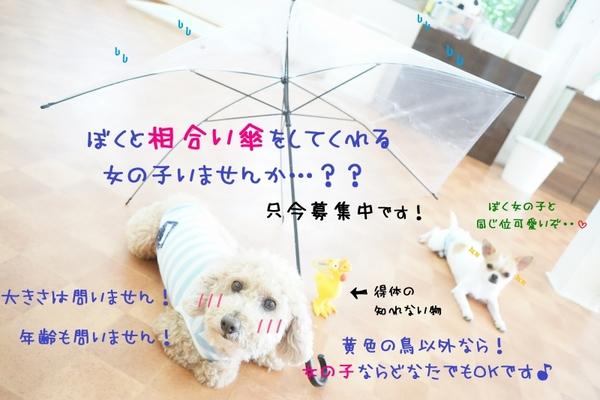 楽しく梅雨を乗り越えよう\(^o^)/