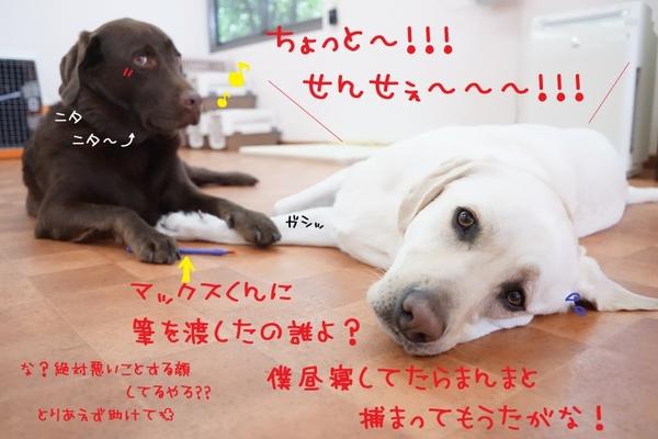 色んな肉球が集結~\(^o^)/