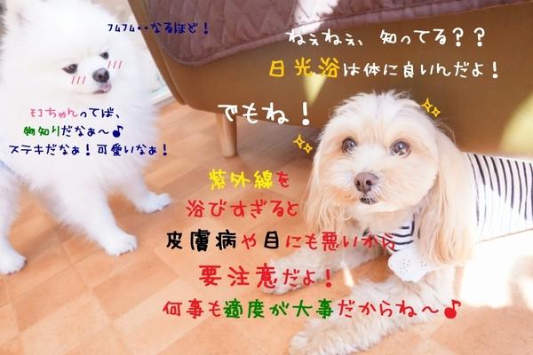 夏に向けて準備開始~( ✧Д✧)
