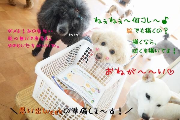 肉球スタンプGETだぜ~\(^o^)/