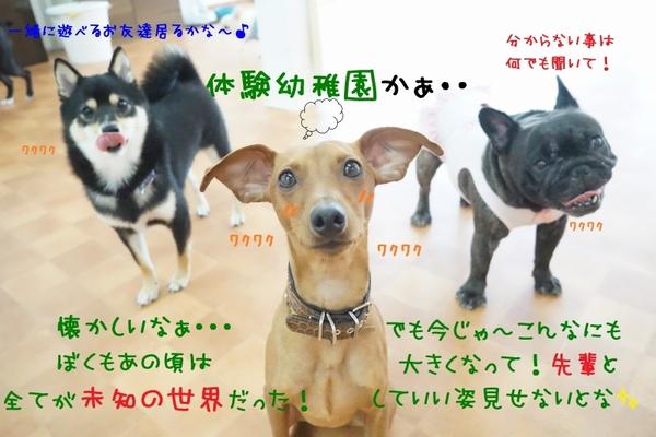 新入生が続々登場~\(^o^)/