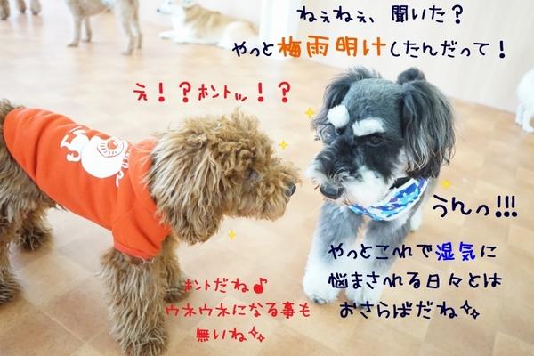 あっという間に七月最終日(^^)/
