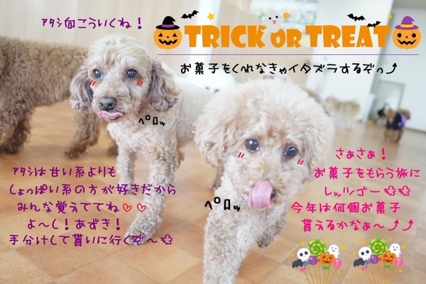 👻Trick or Treat🍭