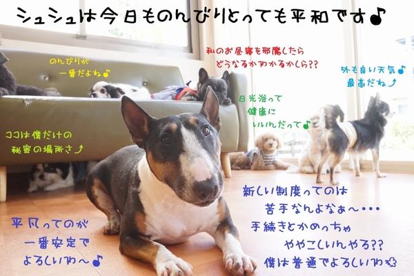 Go To シュシュ でレッツゴー(*´з`)♪