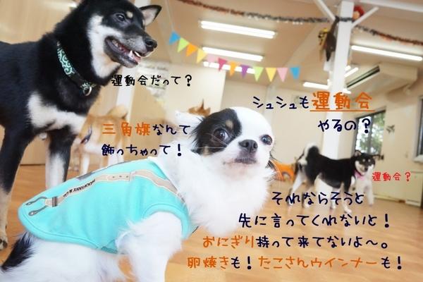 ラストかけっこWeek( ✧Д✧)