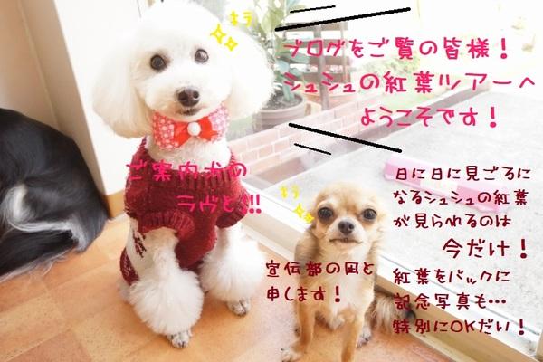 特別な紅葉ツアーへご招待!(^_-)-☆