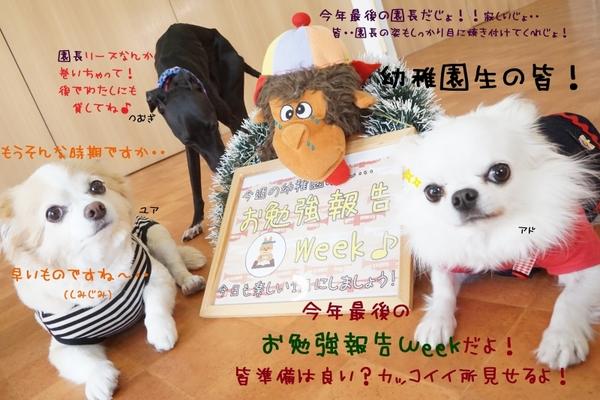 今年最後のお勉強報告Week(^^)/