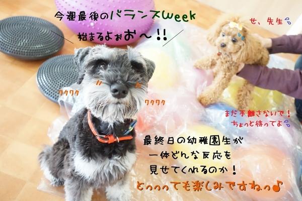 バランスWeek!最終日( ✧Д✧)