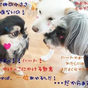 かけっこWeek!5日目ヾ(≧▽≦)ノ