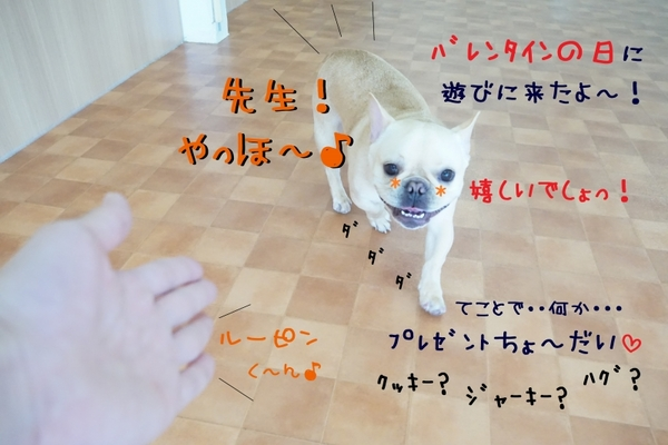 ハッピー!バレンタイン!(*´▽`*)