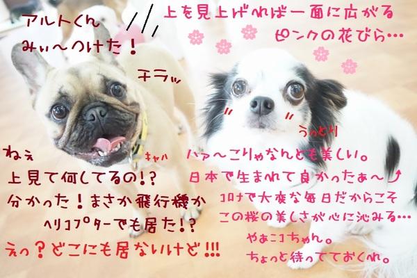 春を楽しむ準備はOKかい!?(^^)/