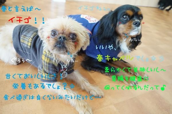 マンネリ打破!!( ✧Д✧)