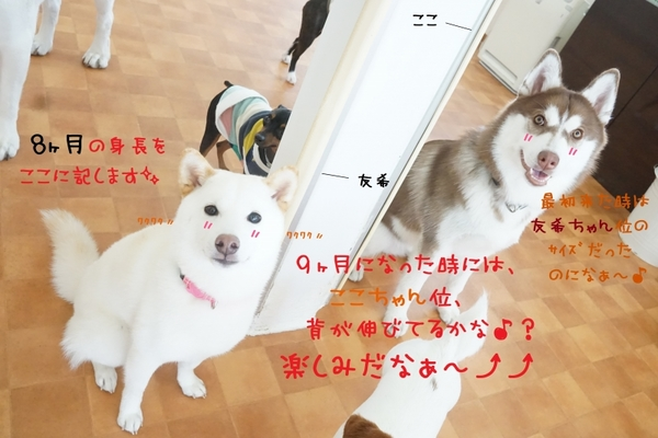 身体測定Week、4日目~(^^)/
