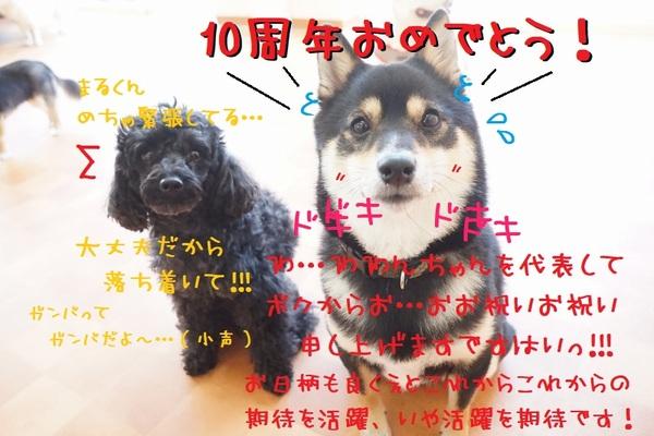 5月10日はシュシュの誕生日!(^^)/