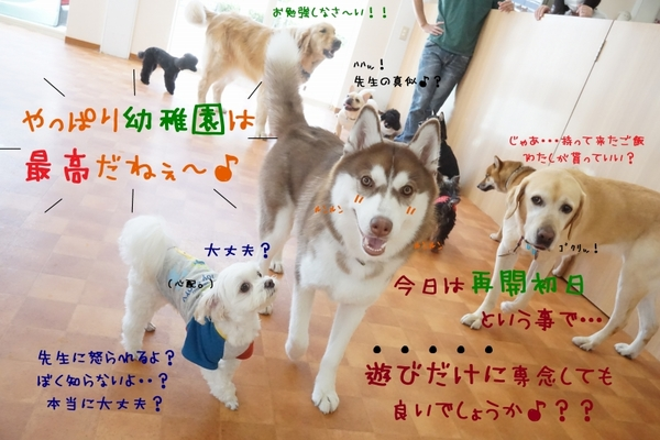 今日からまた元気に幼稚園再開\(^o^)/
