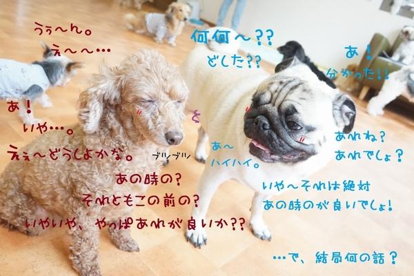 ドシドシご応募ください~(^^)/