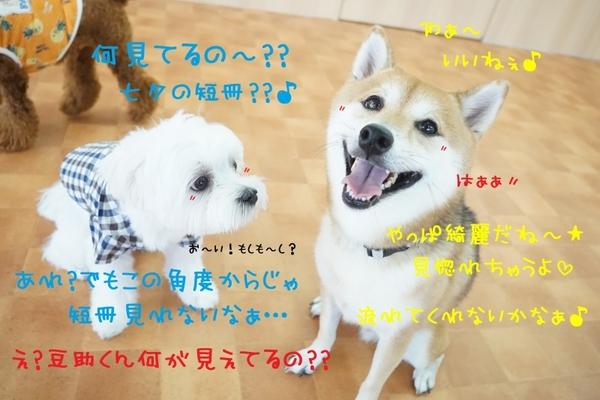 とうとう七夕当日~(*´▽`*)