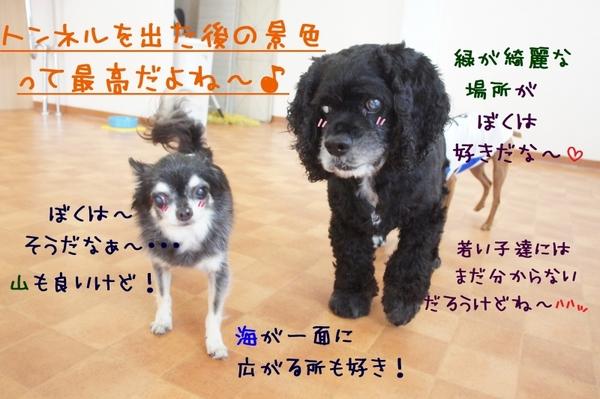 トンネルWeek3日目(^_-)-☆